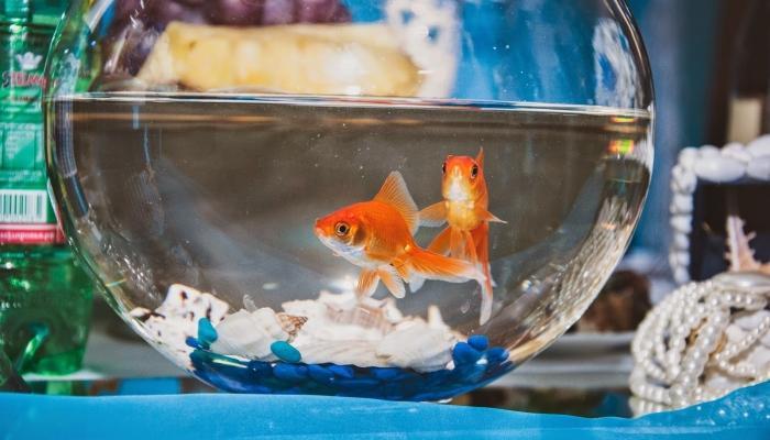 Аквариумы с живыми рыбками на столах станут изюминкой декорирования банкета