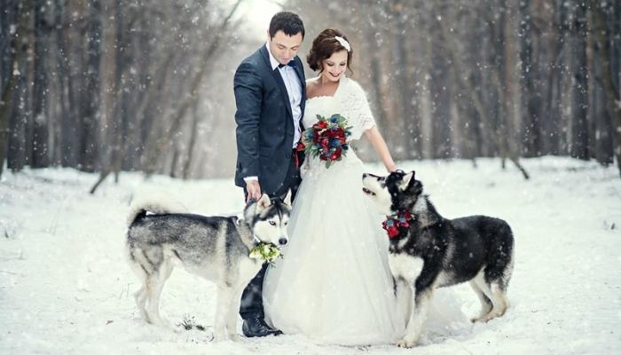 Другой вариант свадебной фотографии с собаками в лесу