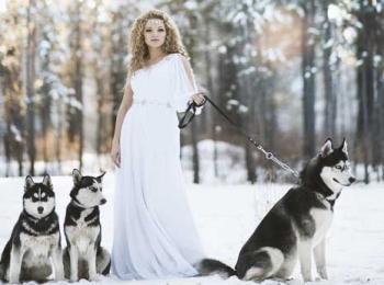 Невеста в платье ампир с тремя хаски в лесу