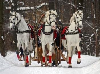 Русская белая тройка лошадей - отличный вариант для создания свадебных зимних фотографий