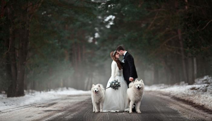 Жених с невестой на лесной дороге с белыми собаками