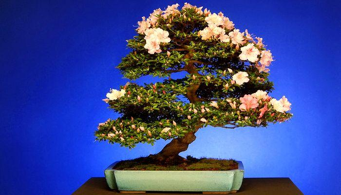 Сказочное деревце Бонсай